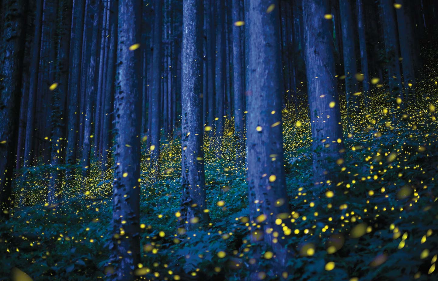 Cc magazine connecticut college image of many fireflies in the woods fandeluxe Image collections