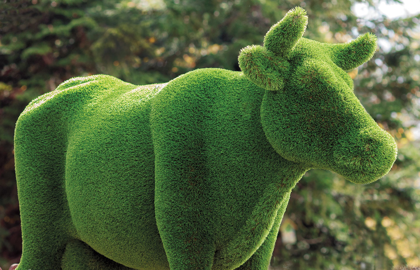 Image of topiary cow