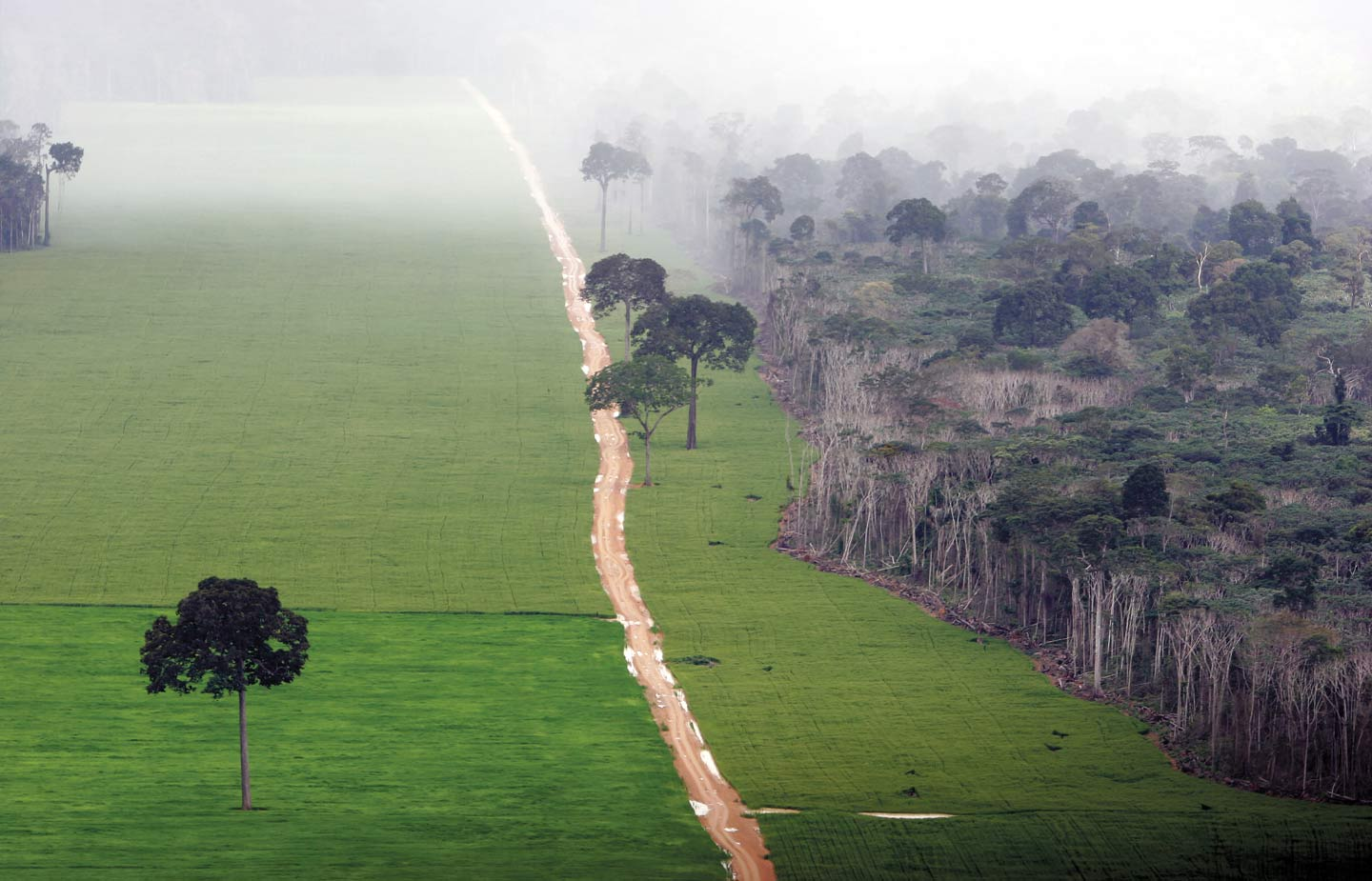 Image of a cleared forest in the Amazon jungle