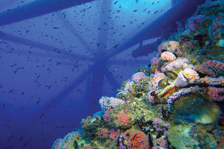Oil and Water - rig to reef - coral