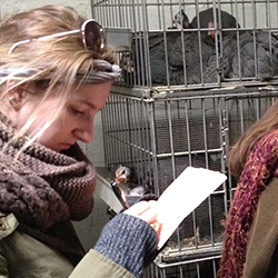 Dayna McCoubrey '14 takes notes during a tour of the Madani Halal slaughterhouse in Queens.
