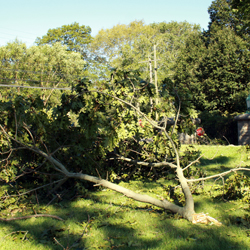 A large downed branch by the Williams Street entrance.