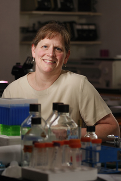 Biology professor Anne Bernhard has won a $202,902 grant to explore the effects of the April 2010 Deepwater Horizon oil spill on the salt marshes that line the Louisiana coast.