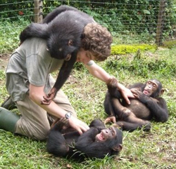 Senior Chris Krupenye, a 2011 NSF Graduate Research Fellow, plays with young chimpanzees during his internship at the Limbe Wildlife Center in Cameroon.