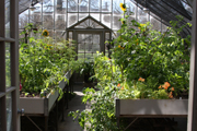 The Connecticut College greenhouse.