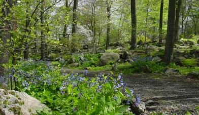 History Of The Wildflower Garden